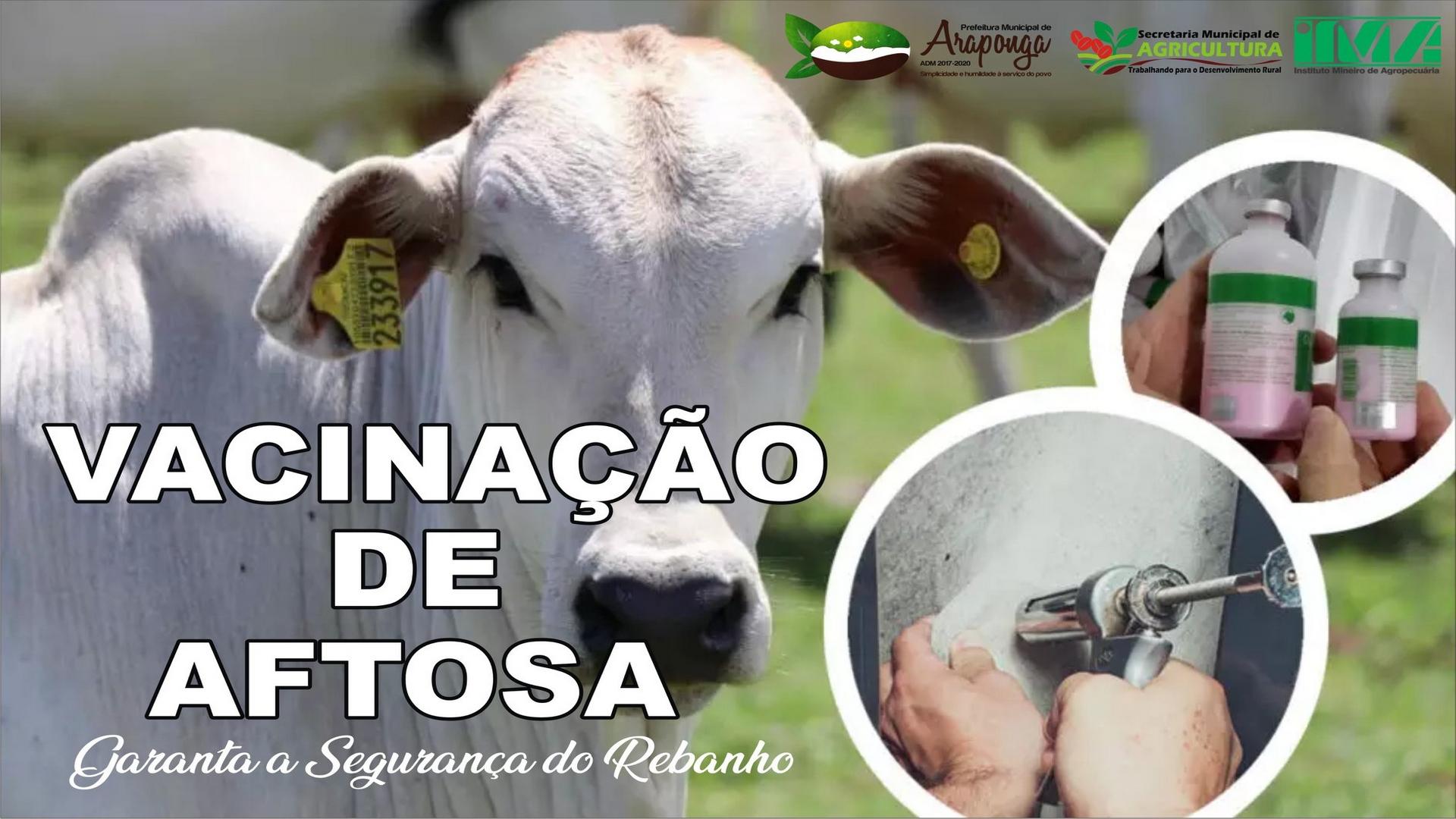 ATENÇÃO PROPRIETÁRIO DE BOVINOS … VACINEM SEU REBANHO !!!
